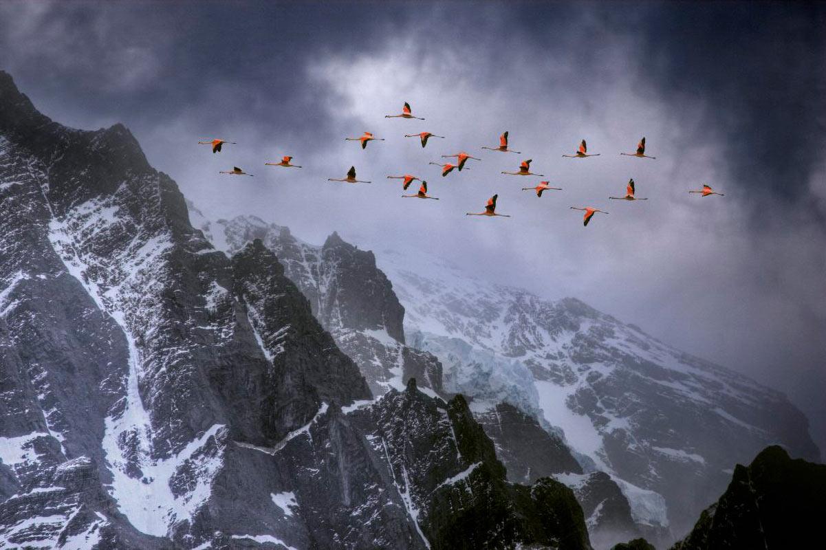 Flamingons väg