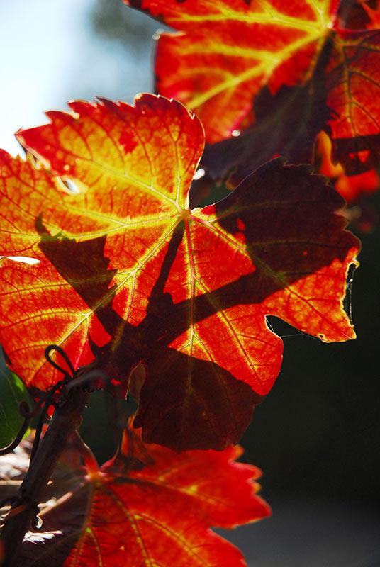 Autumn leaves Philippe Leroux